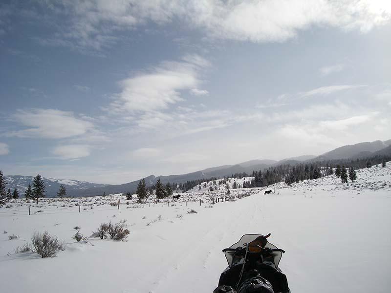 Jackson Hole Snowmobiling Day Tour Old Faithful Tours
