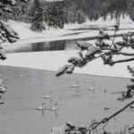 Yellowstone Snowmobiling